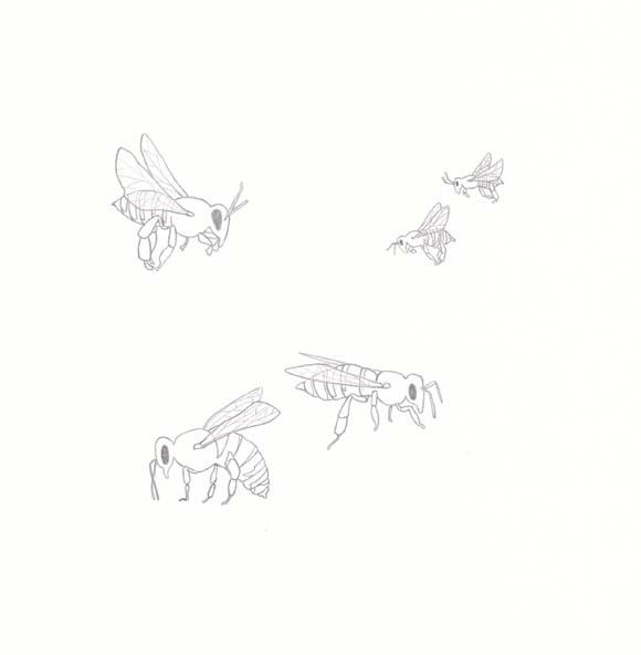 Arkansas - Honeybee - Five