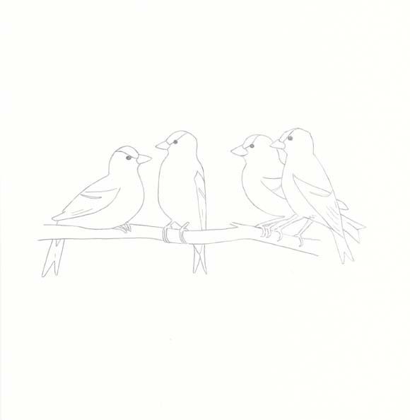 Iowa - Eastern Goldfinch - Four