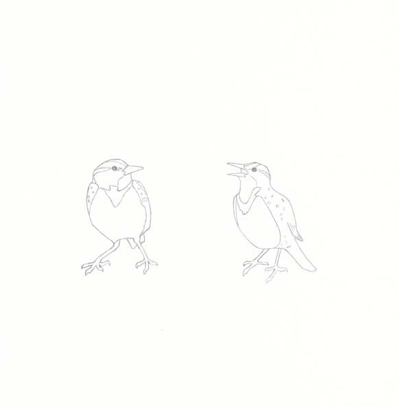 Oregon - Western Meadowlark - Two
