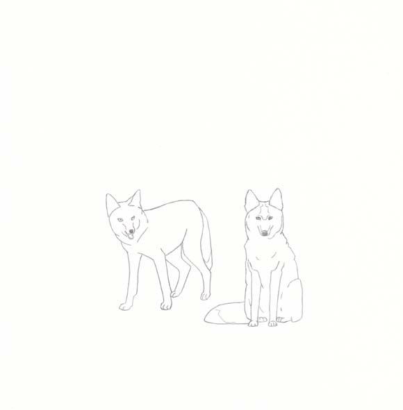 South Dakota - Coyote - Two