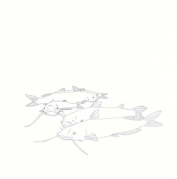 Nebraska - Channel Catfish - Five