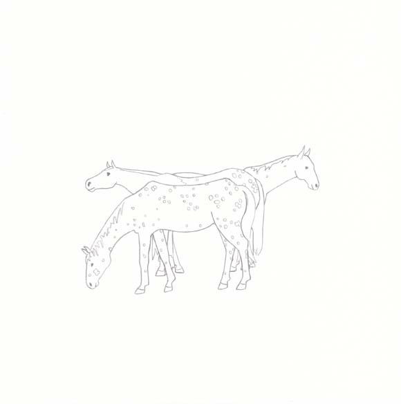 Idaho - Appaloosa Horse - Three