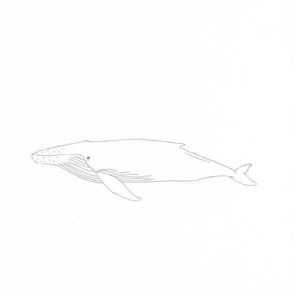Hawaii - Humpback Whale - One