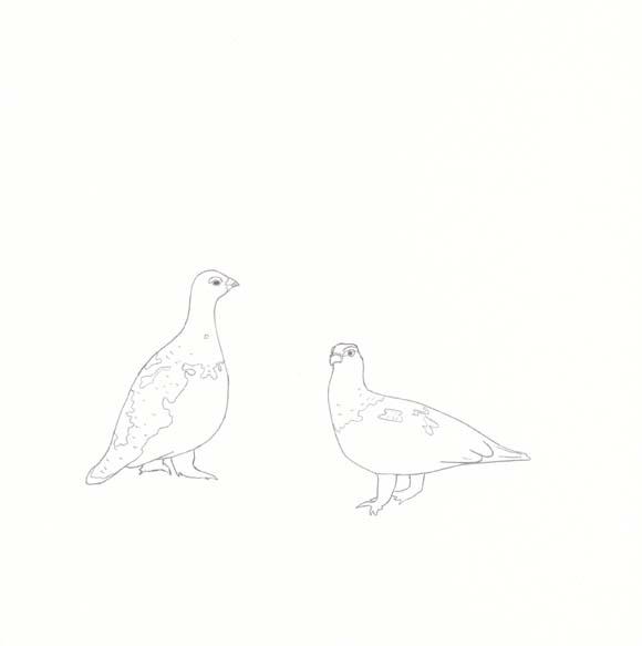 Alaska - Willow Ptarmigan - Two