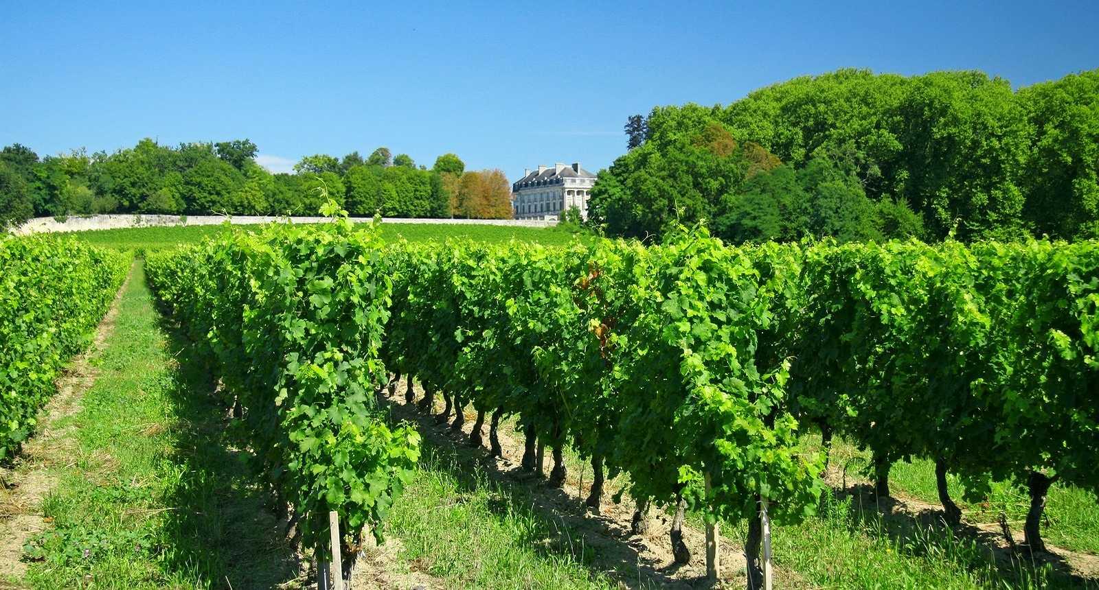 1_vignes-de-bordeaux.jpg