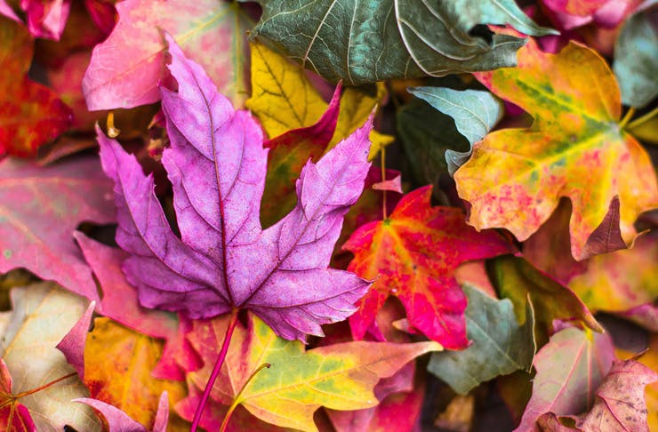Autumn-leaves-auckland.jpg