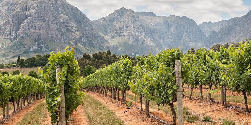 south-african-vineyards.jpg