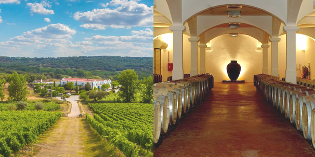 monte-winery2.png