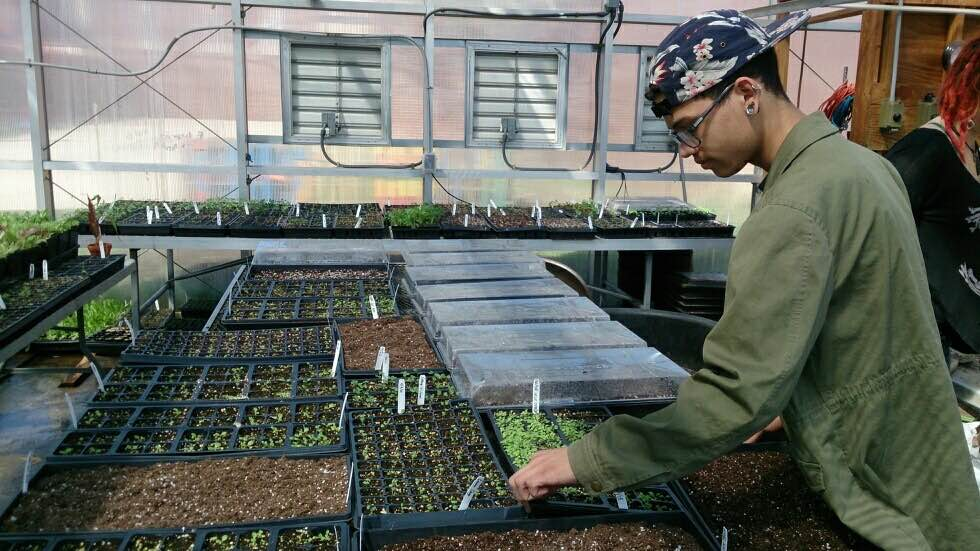 seeds-REA-students-mn-service.JPG
