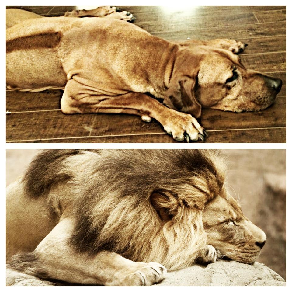 Devash & Lion.jpg