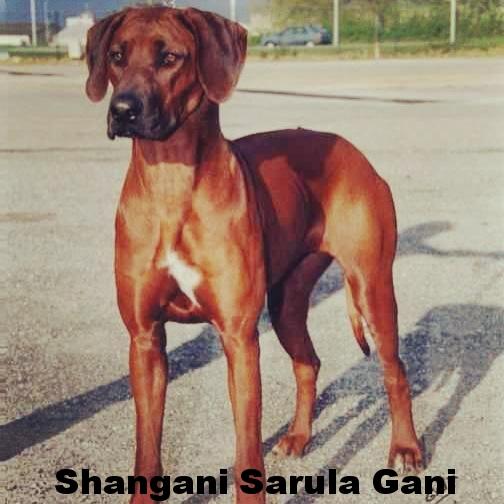 Shangani Sarula Gani.jpg