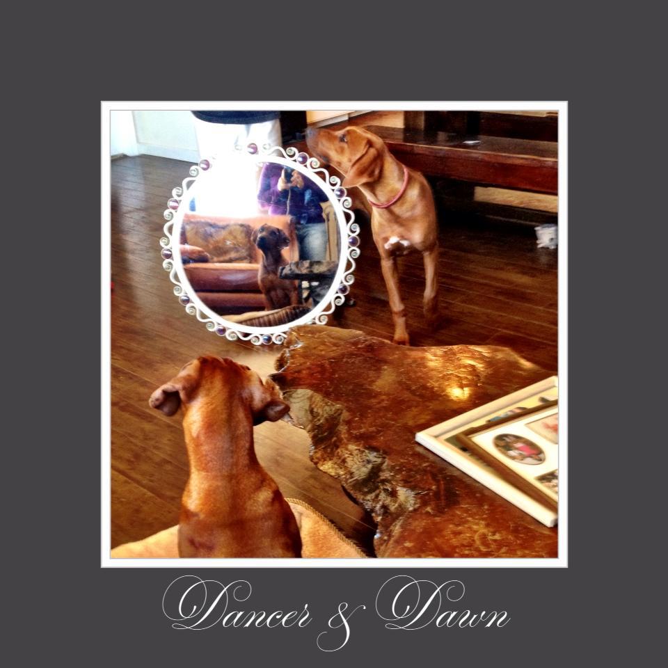 Dawn & Dancer mirror.jpg