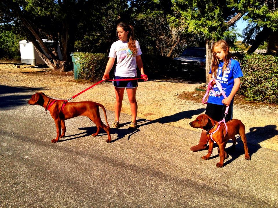 Dawn & Dancer puppy walk.jpg