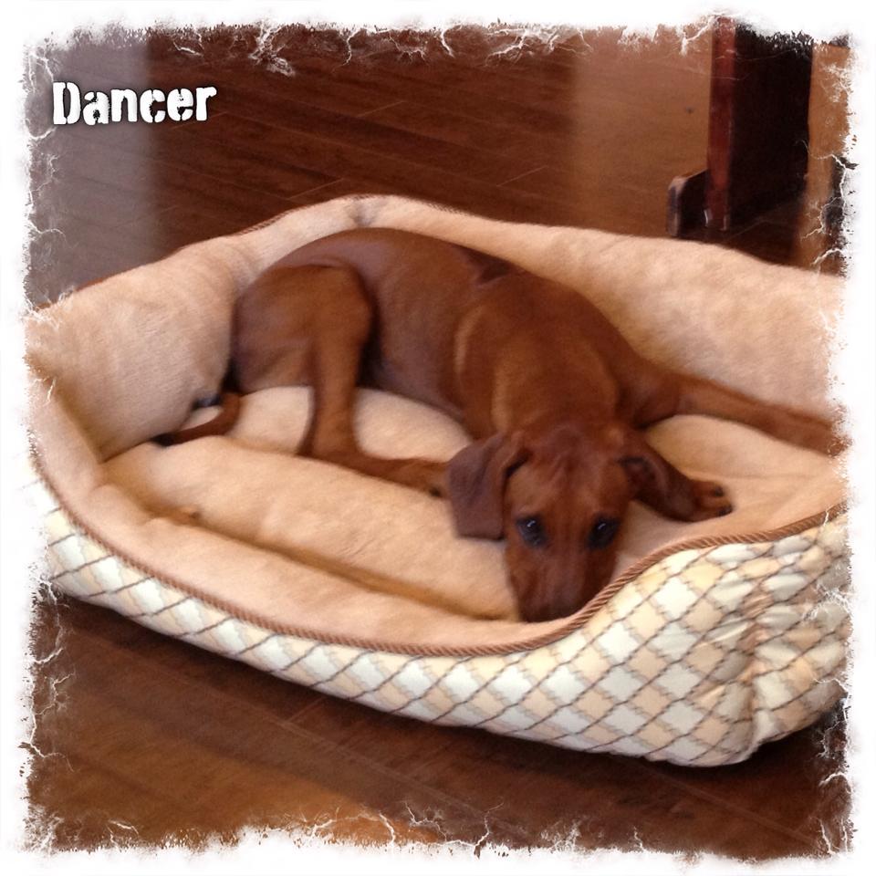 Dancer bed.jpg