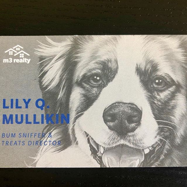 It's finally official!!! Lily has received her promotion after all her hard work!! So proud of our favorite office dog!! #bumsniffer #treatsdirector  #adogslife #woof