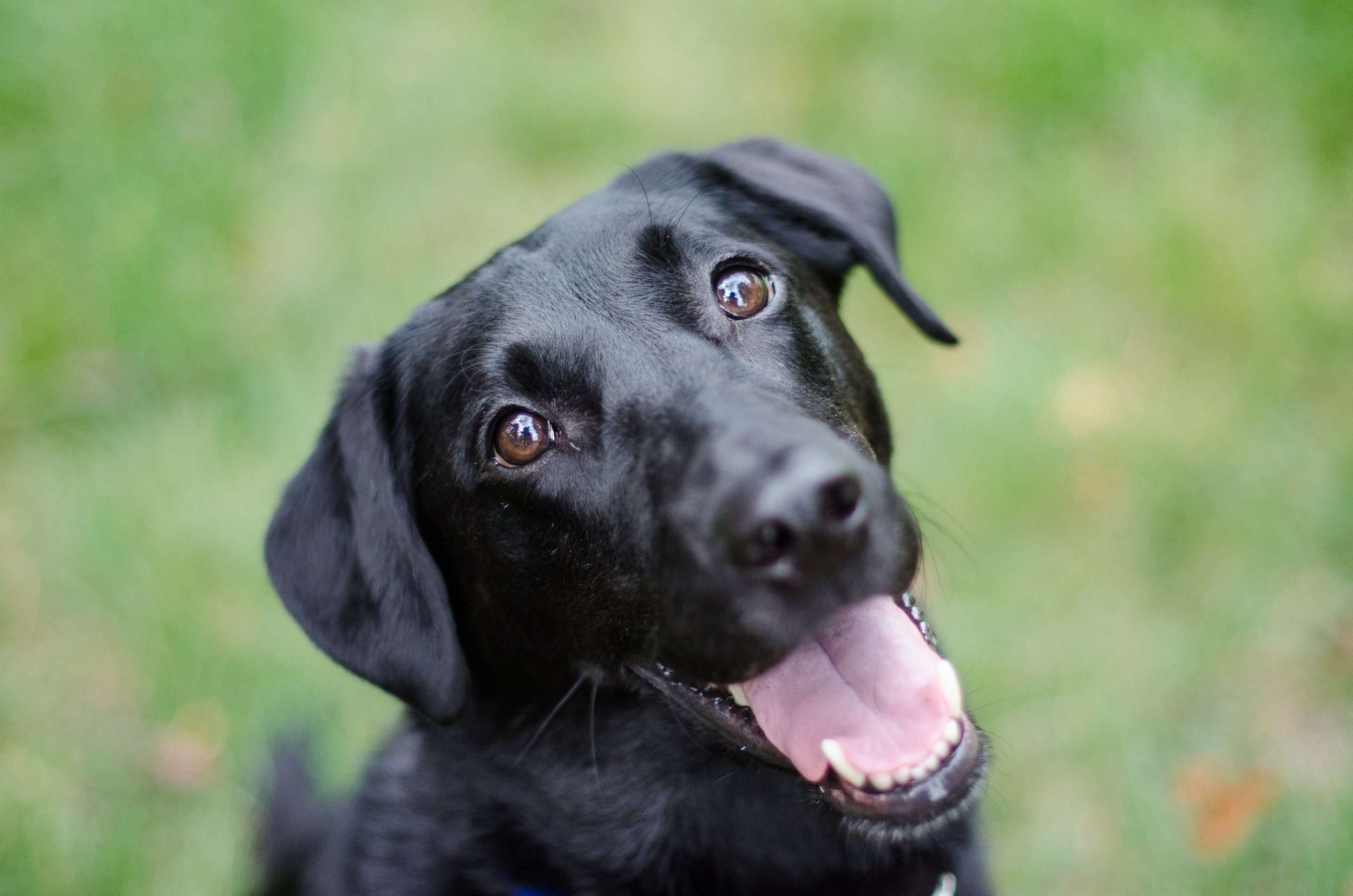 """Separating inference from observation requires reflection and adjustment on your own thought processes, which can seem like a big task. Think about the idea of a """"dominant"""" dog. We observe and infer rather than observe and question to get to the truth. We notice behavior that fits our stereotypes."""