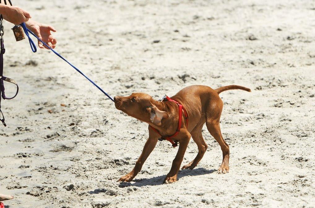 DOG WALKING TRAINING