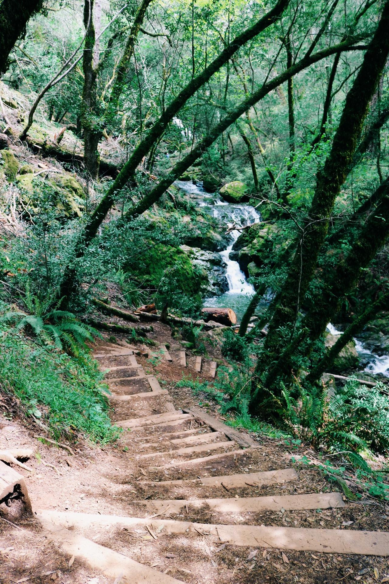 mount-tam-hiking-trails.jpg