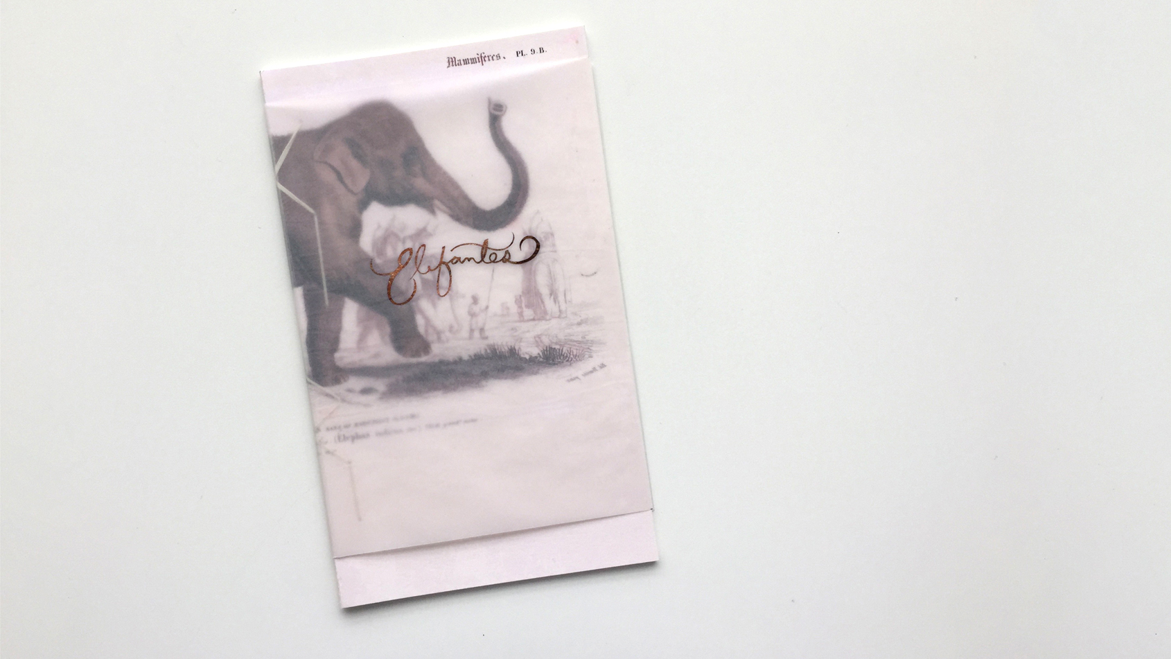Book: Elefantes (Elephants)