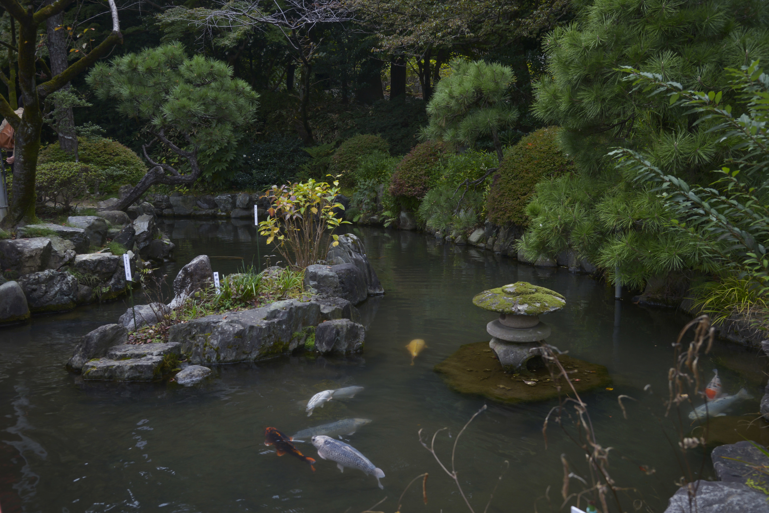 Fish swim throughout a pond within the Takahata Fudo Temple grounds in Hino City, Japan, Nov. 1, 2015. Visitors can get to the temple through the Niomon, the main gate, to view the Fudodou, the main temple, multiple buildings and 88 Buddhist statues throughout a hiking path. (U.S. Air Force photo by Senior Airman David Owsianka/Released)