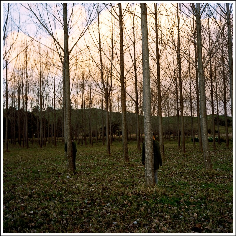 We stand with the trees that are long, paced out and planted. We are like the trees?  That are long paced out and planted.  2006