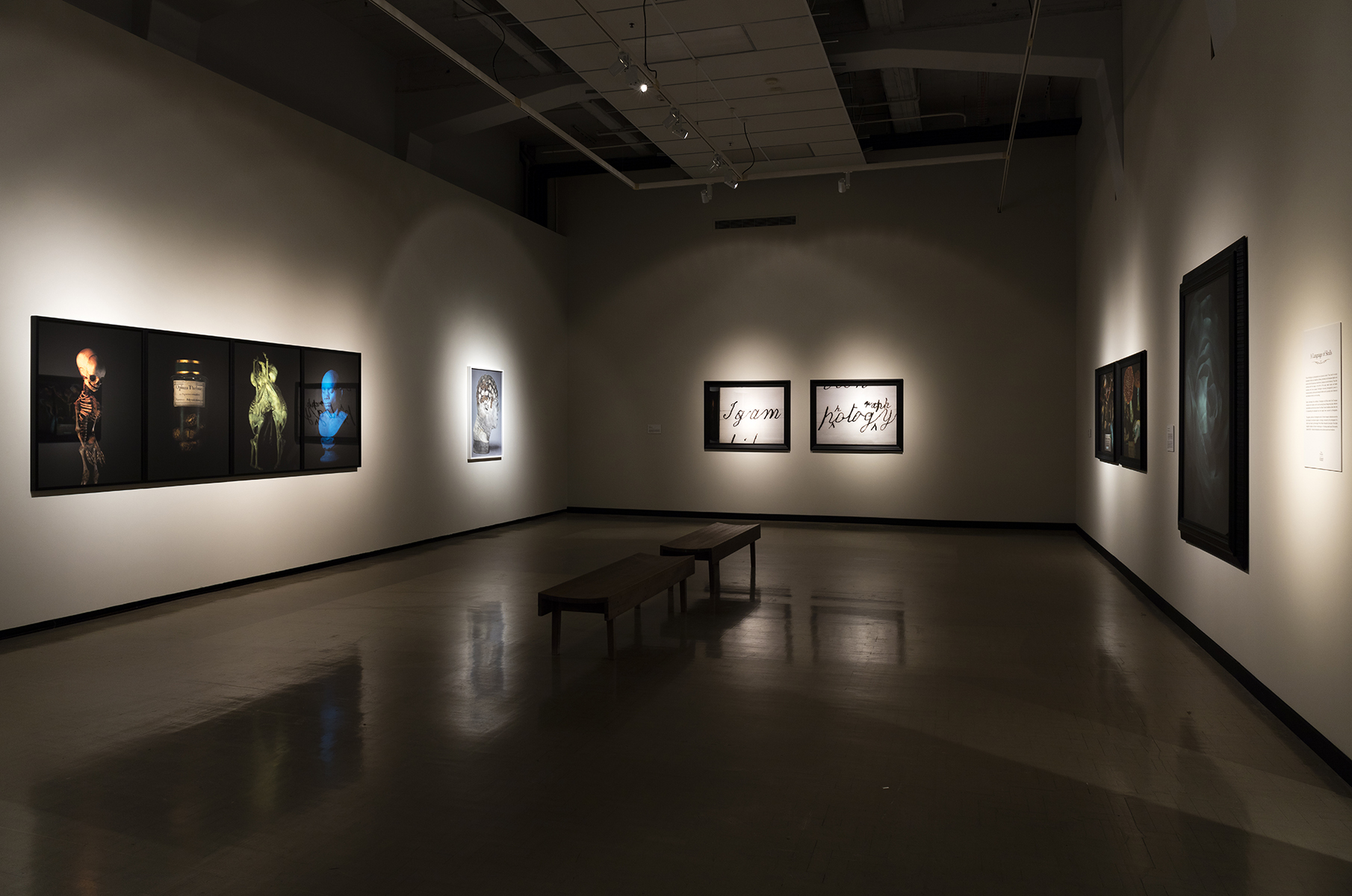 Fiona Pardington A Beautiful Hesitation (installation view) 2015.