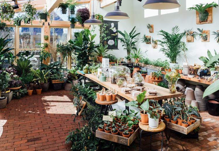 pistils-nursery_gardenista-solarium-opening-photo (1).jpg
