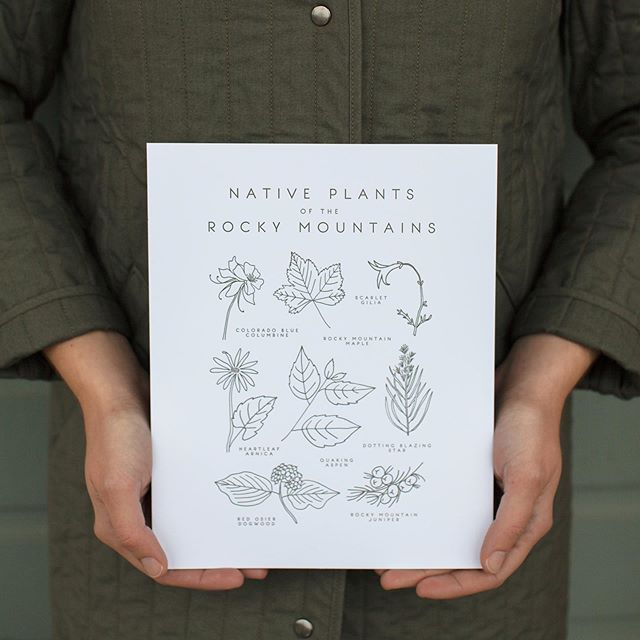 The Native Plants of the Rocky Mountains print is finally back in stock in the Taiga Press shop! I'll be printing more prints this week too 🌿 | photo by @_tanyapavlova_
