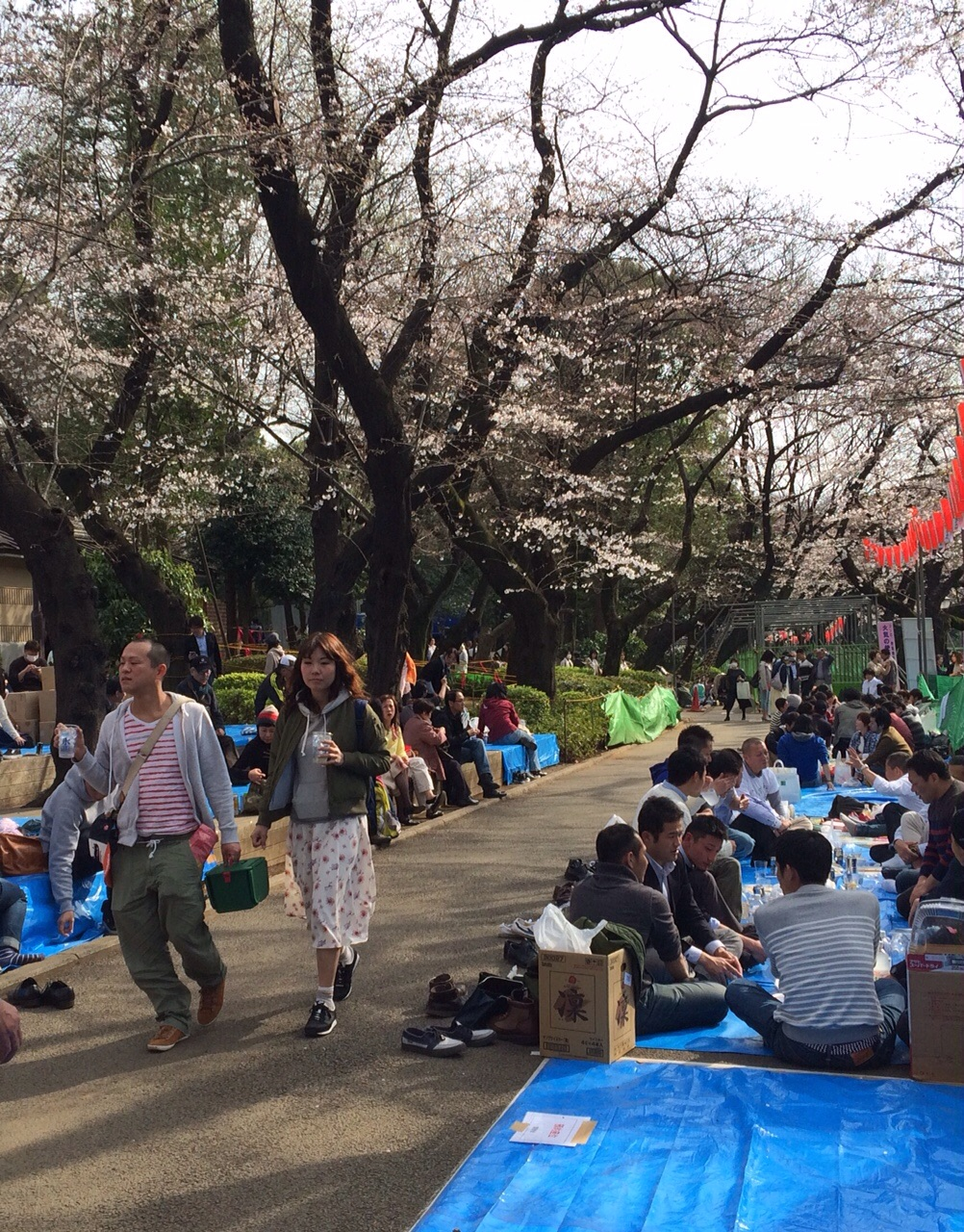 Getting in the Hanami mood - looks like we may be a week early for the fullness of the blossom viewing season.
