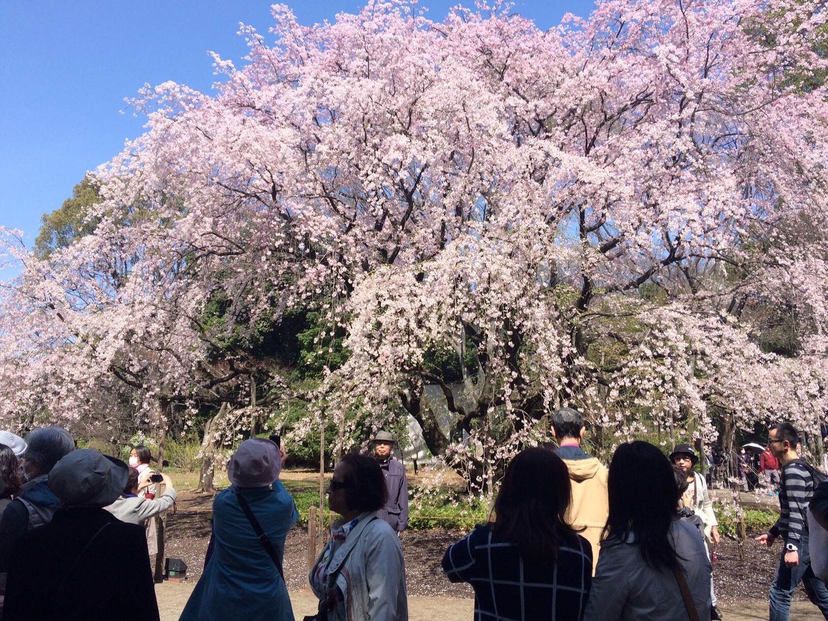 Blossom woos the crowds