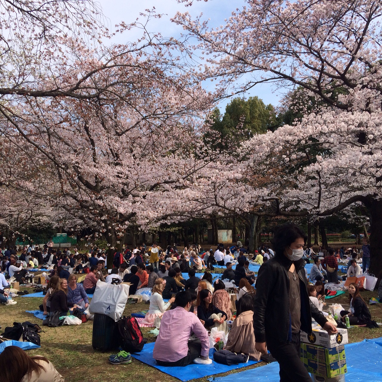 Hanami... This is how we do it!