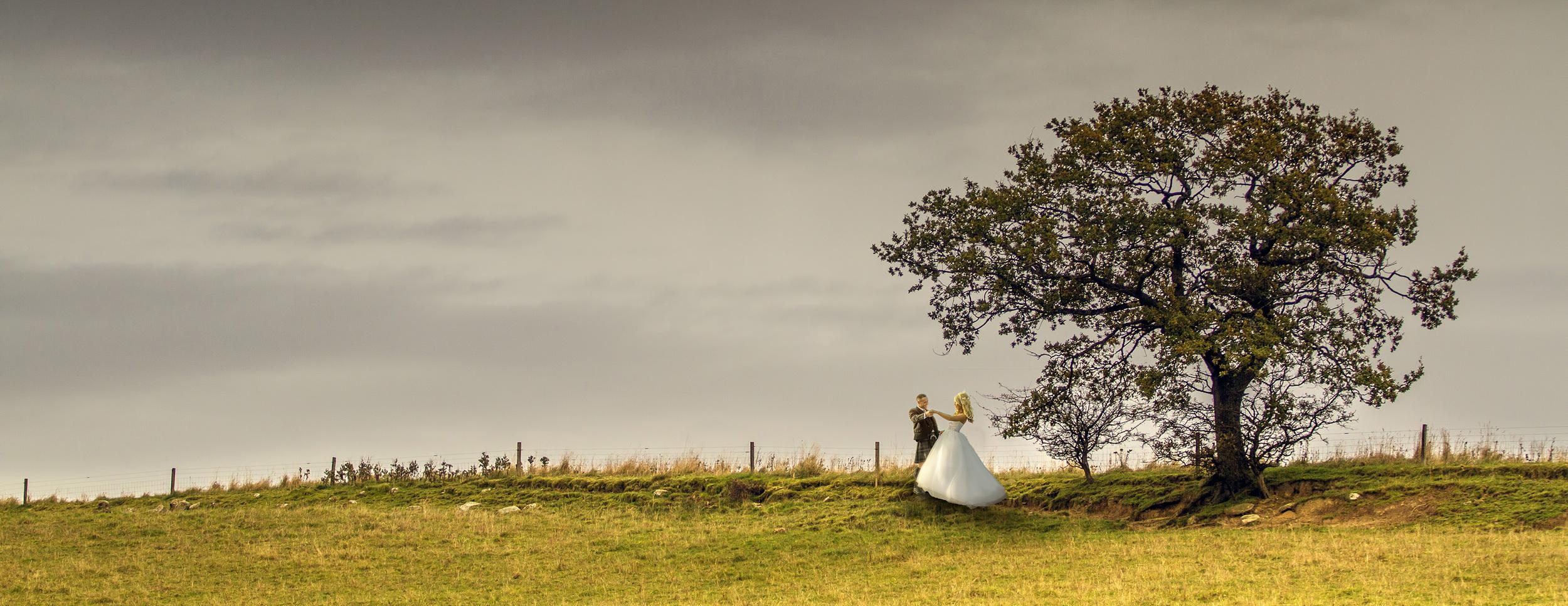 Solo tree in an empty field