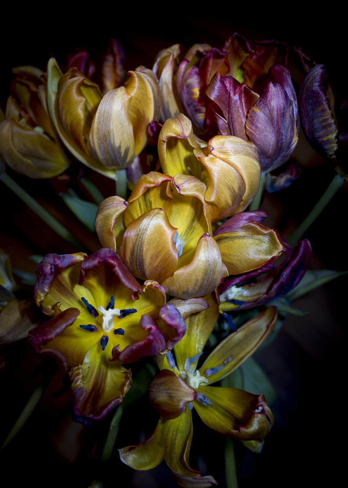 Tulips, I