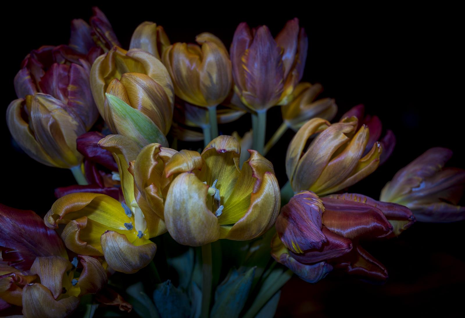 Tulips, III