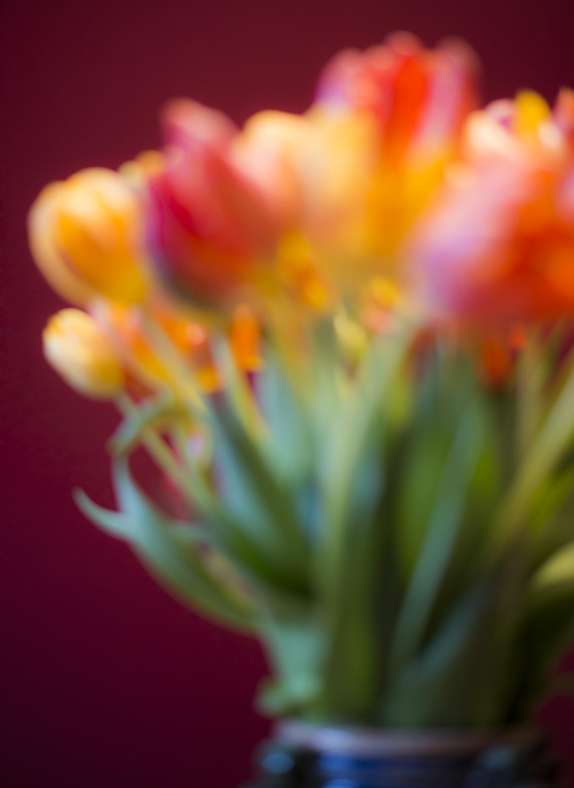 Tulips, defocused