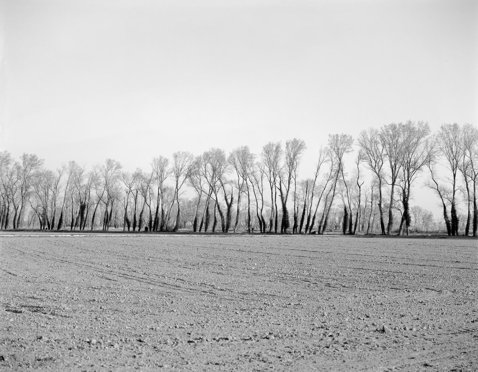 Camargue-67.jpg