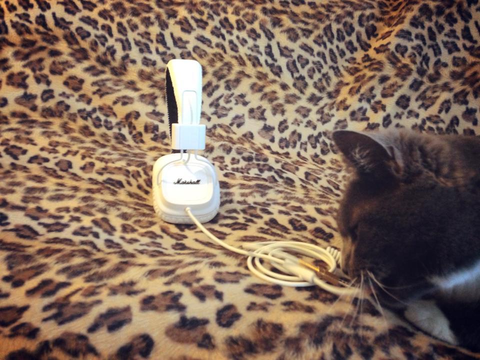 Marshall-headphones-cat-The-Wong-Janice3.jpg