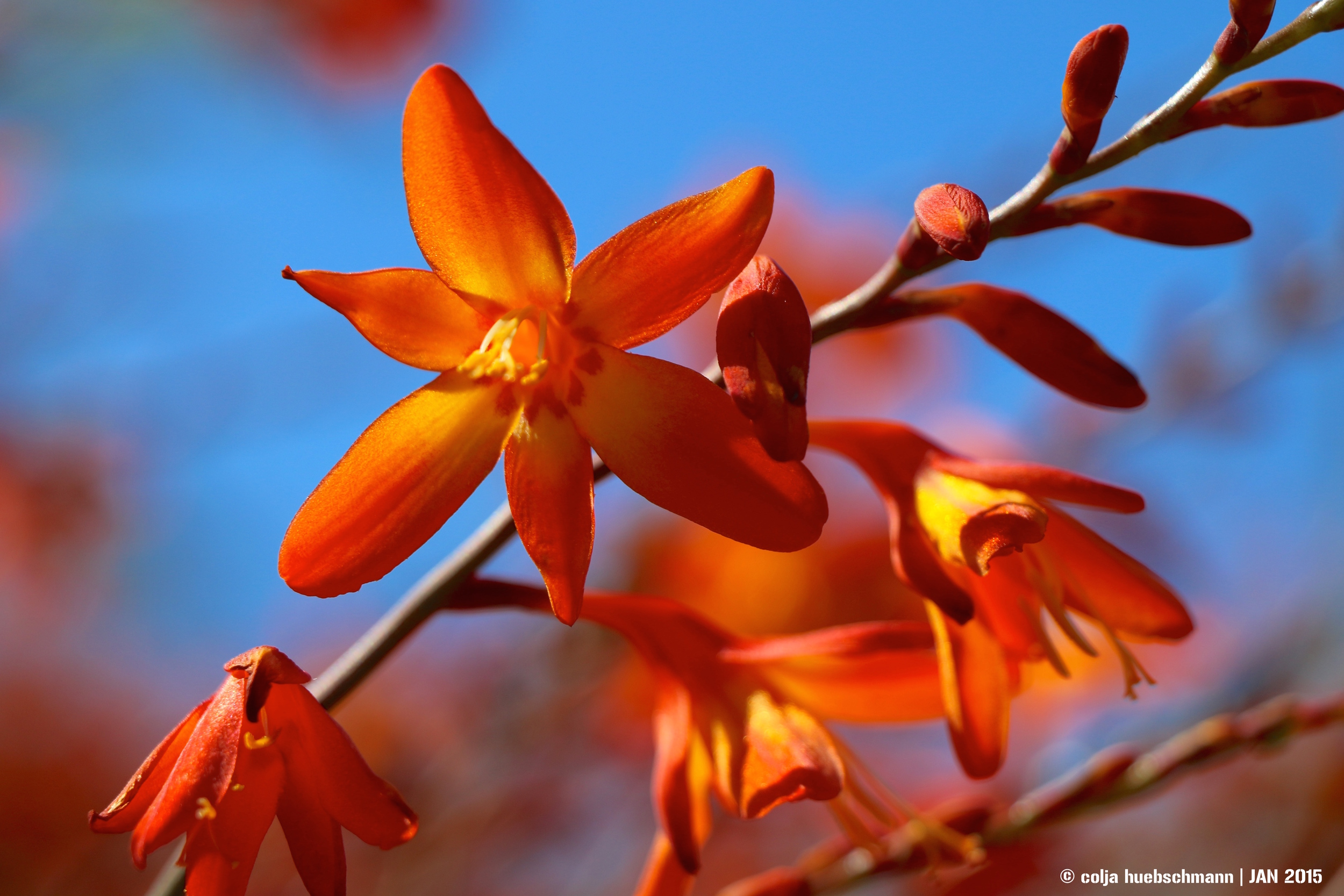 flower in greymouth, west coast