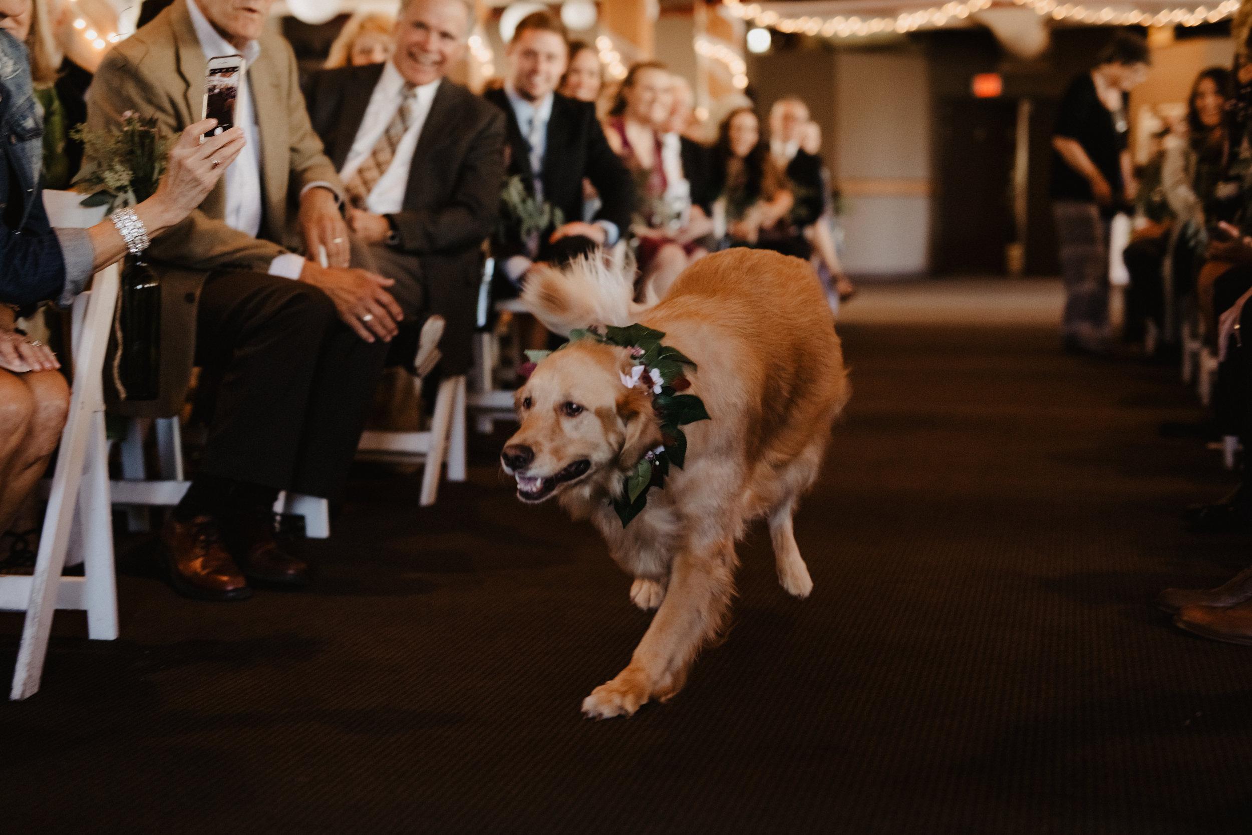 Doggo-Wedding-Photos-01