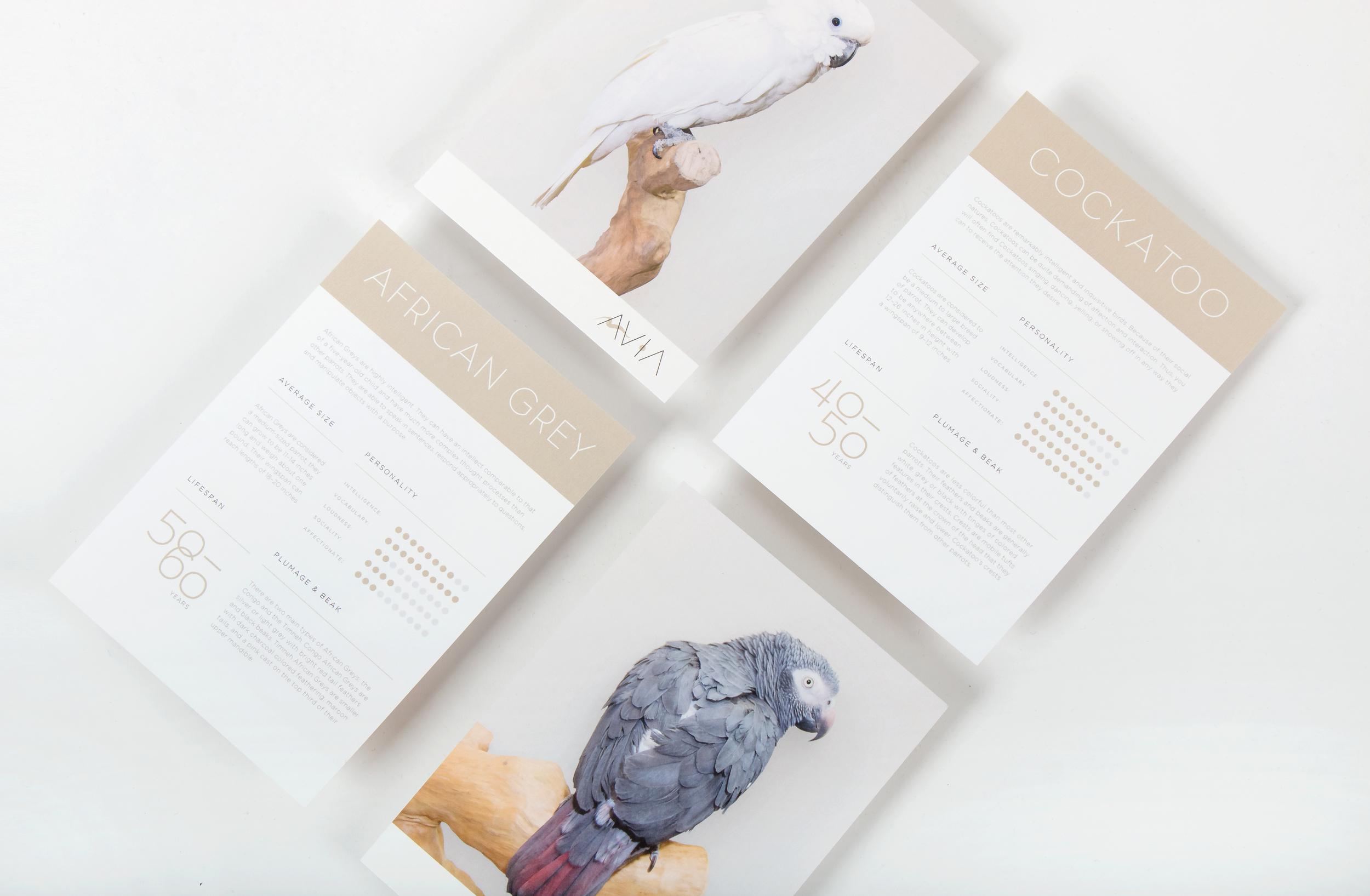 Takeaways-Cockatoo-&-African-Grey.jpg