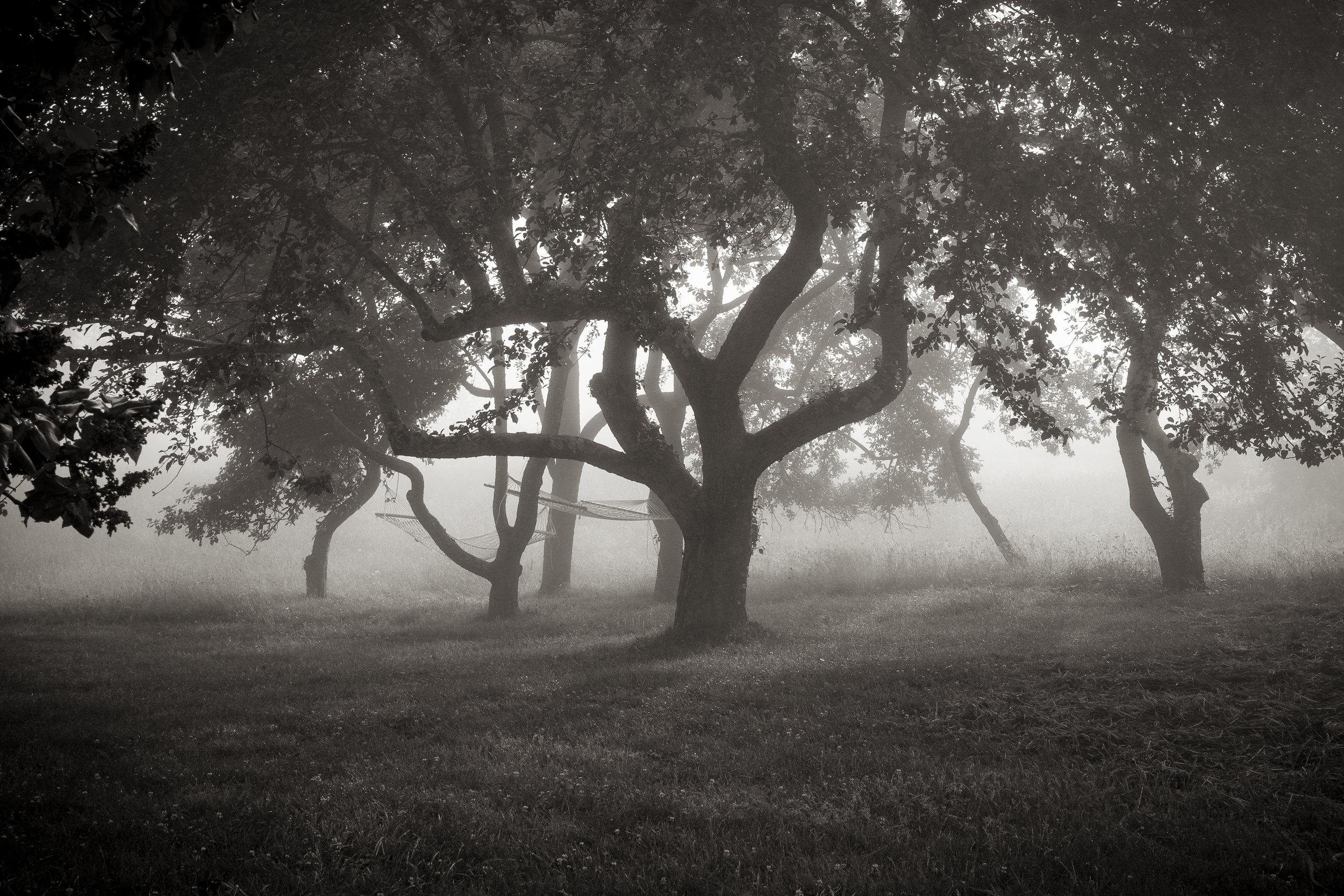 Hammocks and Apple Trees