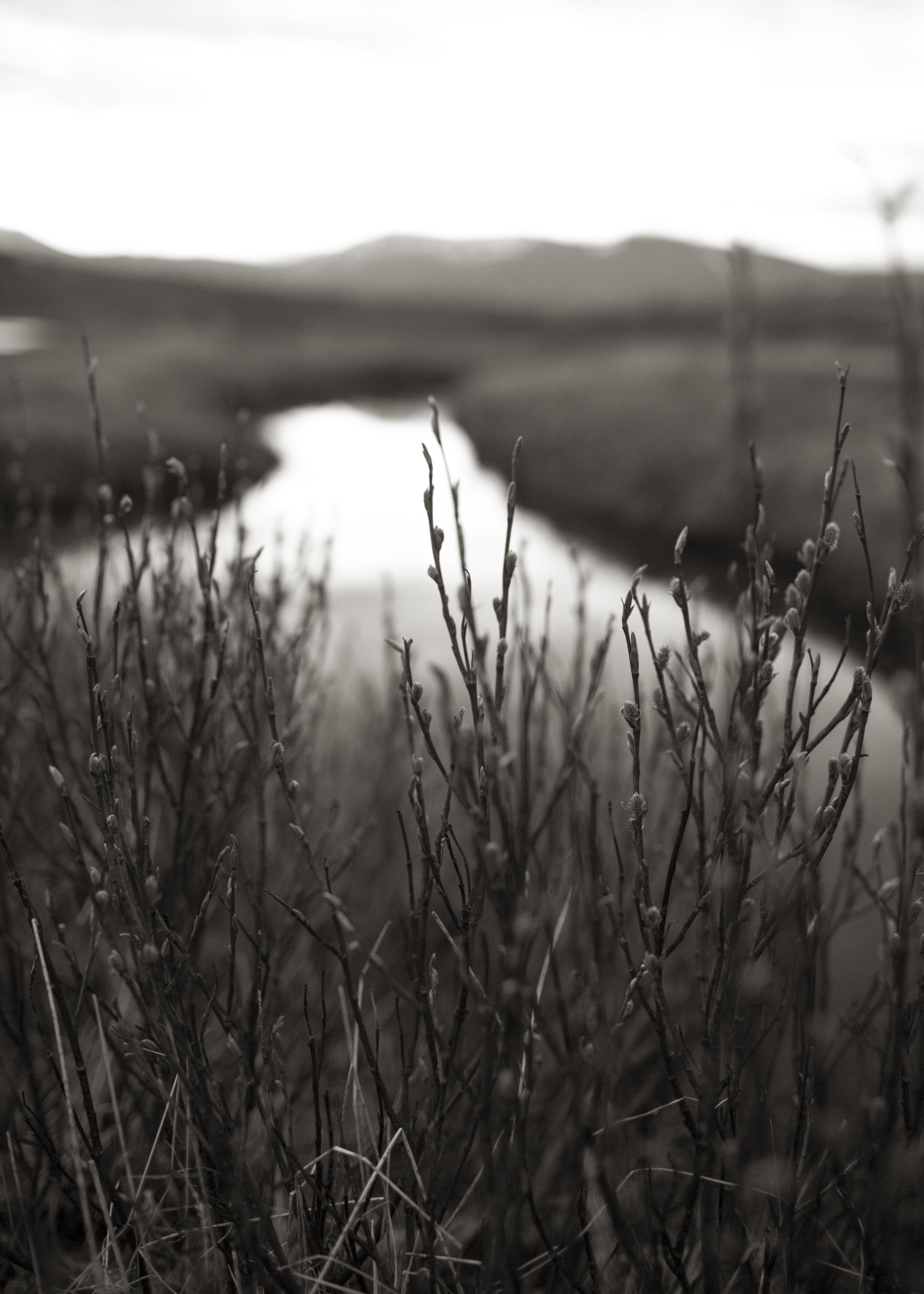Icelandic Dawn