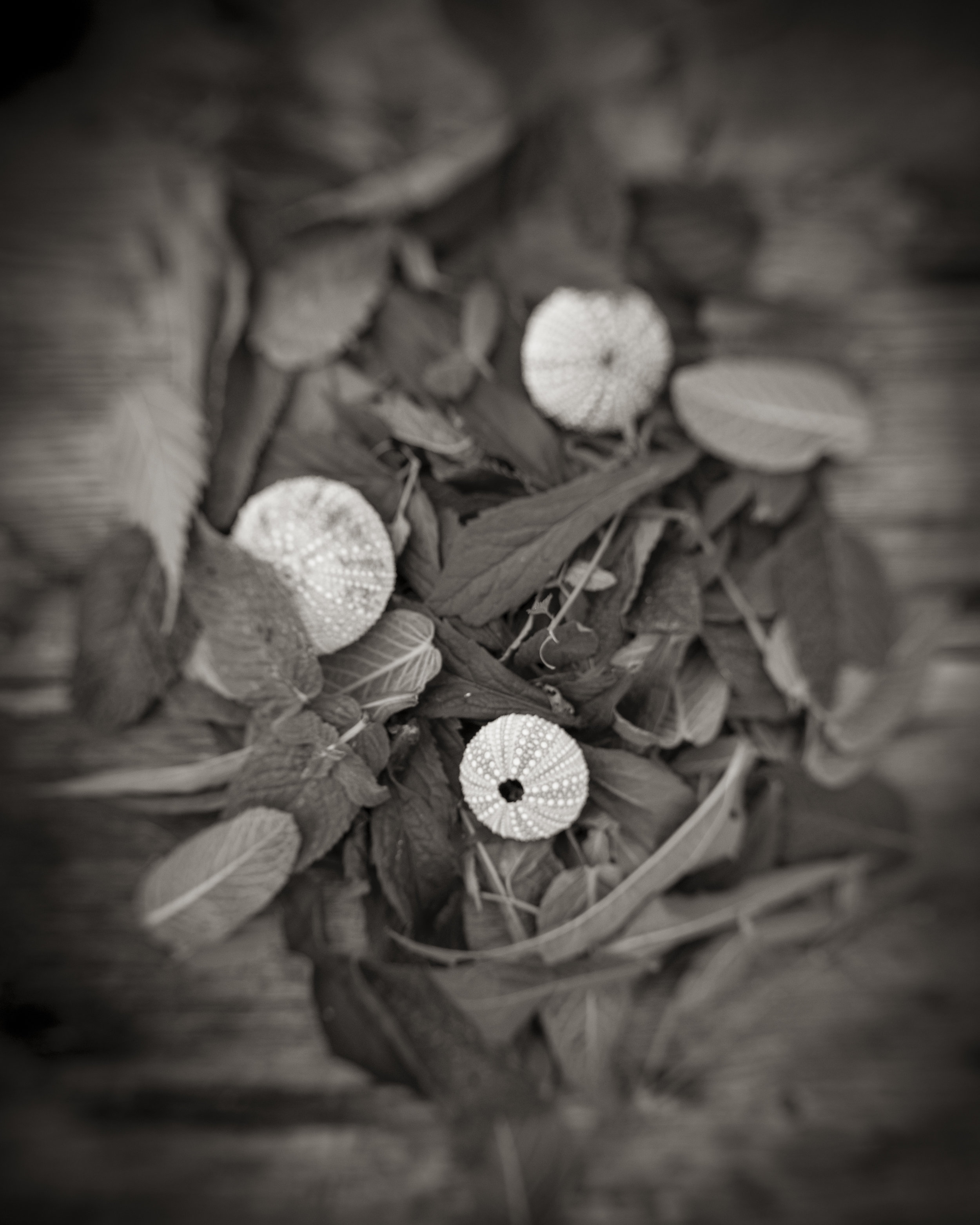 Mint and Periwinkles