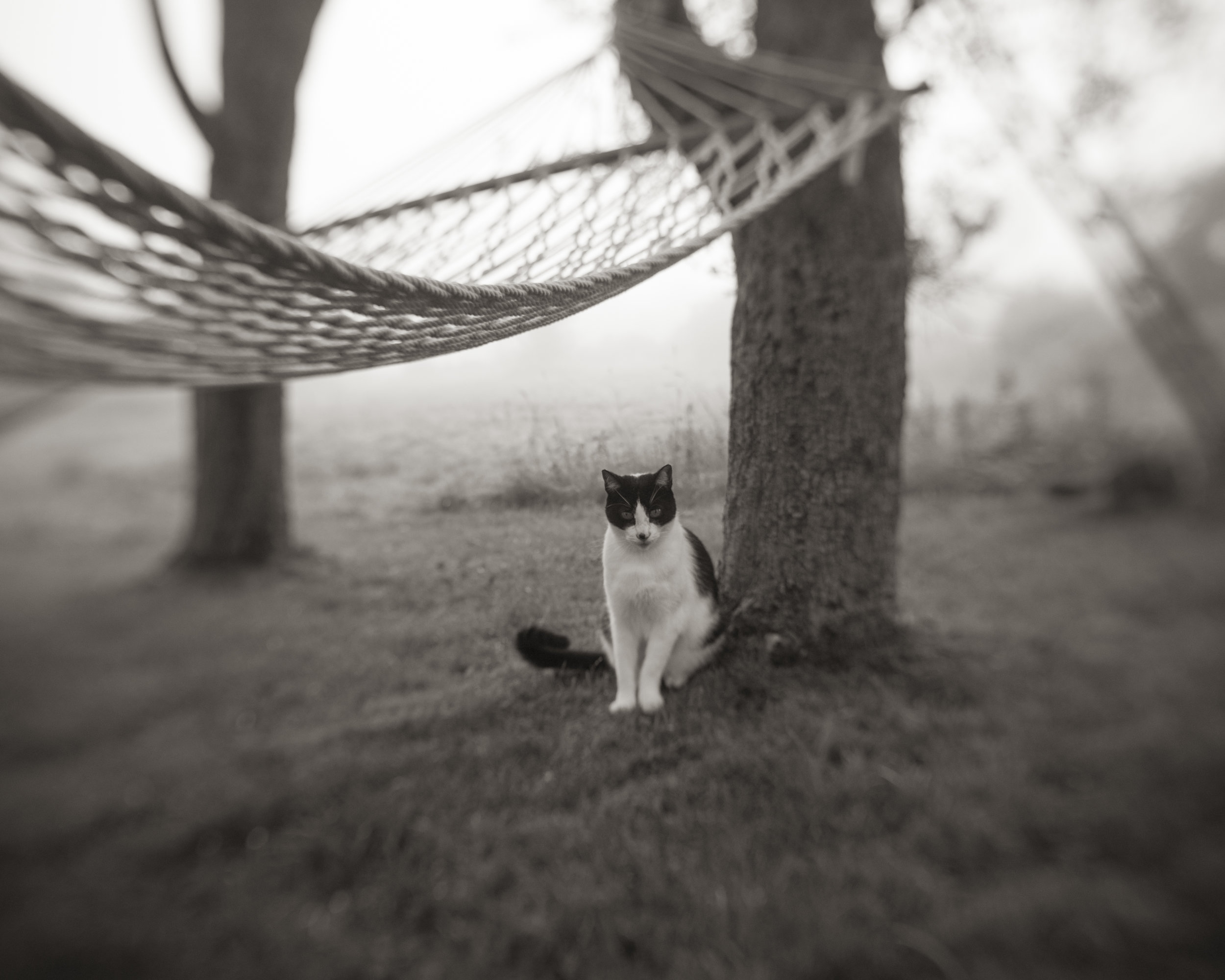 Patch Under the Apple Trees