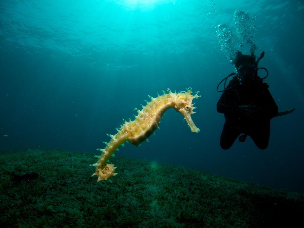 seahorse_169310627.jpg