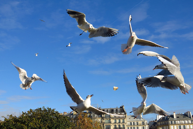 bird attack.jpg
