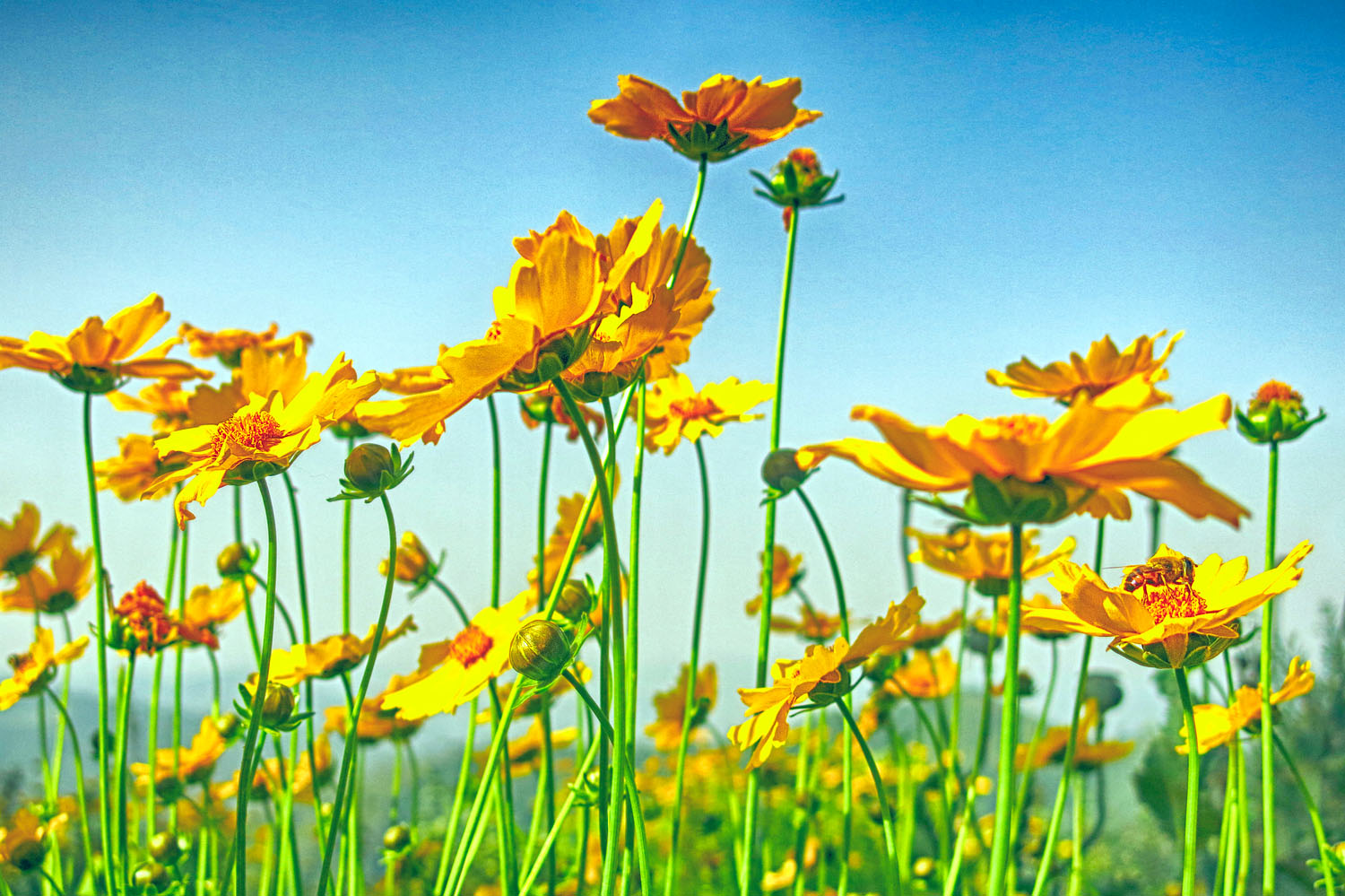 IMG_6778_yellow flower patch.jpg