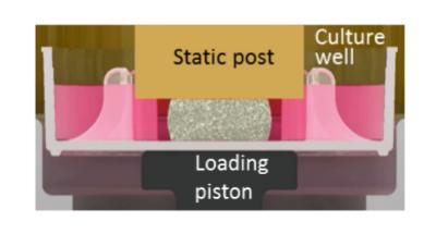 Fig 1: Stimulation in unconfined compression
