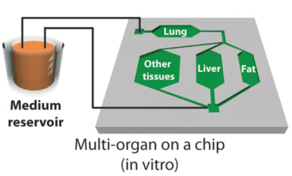 The concept of multi-organ-on-a-chip.  Biotechnology Journal, 2013