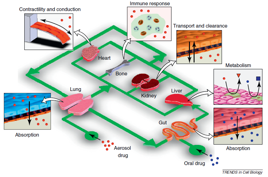 The concept of human-on-a-chip.  Trends in cell biology, 2011